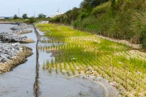 Coal Terminal's Living Shoreline Wins Award