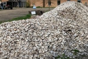 VIDEO: Shell-Shakers Keep Oyster Restoration Going Despite Pandemic