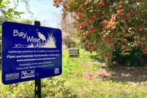 Bay-Wise Gardens Reimagined
