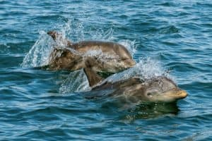 VIDEO: Dolphin-Spotting on the Rise Among Bay Boaters as 2021 Sightings Begin