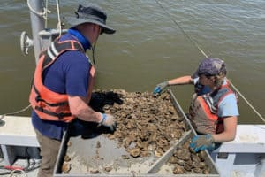 Study Reveals Truth about 1980s Oyster-Killing Disease