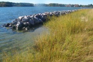 State Guidance: Va. Waterfront Homeowners Must Use Living Shorelines Whenever Possible