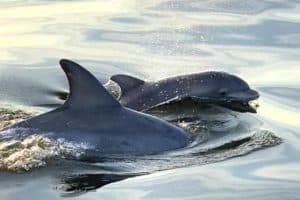 Chesapeake DolphinWatch App to Release Book