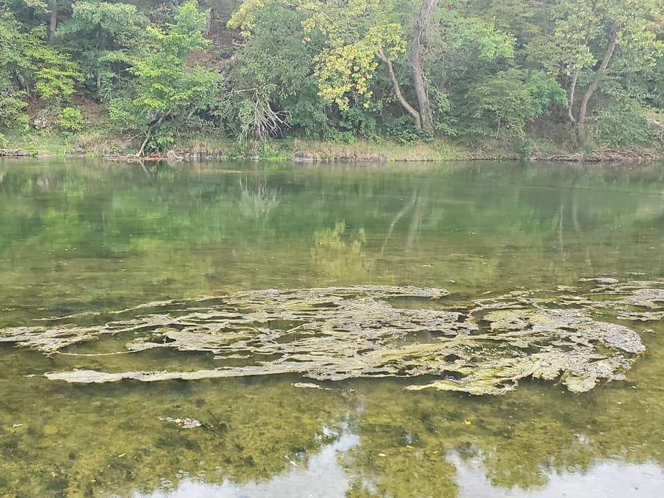 50+ Mile Stretch of Shenandoah Closed to Water Contact Due to Algal Blooms