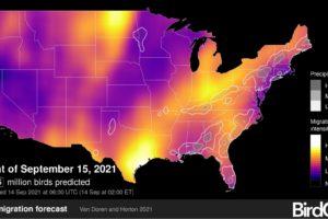 Track Peak Bird Migration with Live Heat Maps