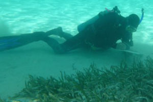 VIMS Underwater Grasses Pioneer Honored with Lifetime Achievement Award
