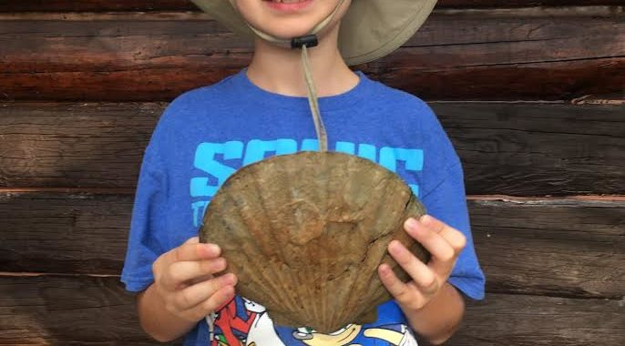Boy Finds Intact Prehistoric Shell in Va.'s Urbanna Creek