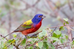 A Year of Rare Birds Thrills Md. Birdwatchers