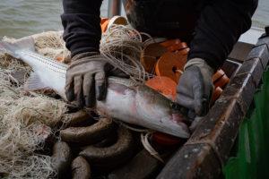Fishery Managers Set Deadline on Rockfish Rebuild